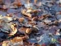 Idąc po szlaku słychać niepowtarzalny szum liści oraz trzaskanie skorupek z buczyny...