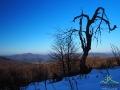 Niezwykłe kształty drzew bieszczadzkich...