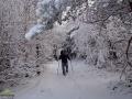 Karpackie wędrowanie po lesie bukowym w Bieszczadach.