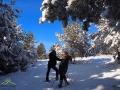Zima w Bieszczadach - drzewa oblepione śniegiem i błękit nieba...