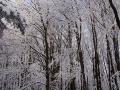 Bieszczadzki las bukowy w zimie.