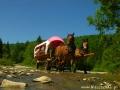Przejazdy wozami przez rzeki na TRAPERSKIEJ PRZYGODZIE w Bieszczadach.