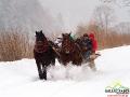 Konie pędzące po świerzym śniegu podczas kuligu w Bieszczadach.