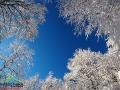 Niebo nad Bieszczadami zimą widziane w koronach buków.