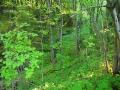 Jeden z leśnych wąwozów widoczny z trasy przejazdu drezynami.