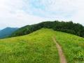 Szlak niebieski prowadzący granicą między Polską, a Słowacją z Roztok Górnych w stronę góry Jasło.