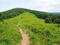 Szlak i polana tuż przy szczycie góry FERECZATA 1102m.