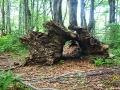 Do pnia tego starego drzewa może wejść 2 osoby i takie zdjęcie też mamy :-)