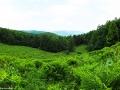 Widok z jednej z polan między Okrąglikiem, a Fereczatą w stronę Cisnej. Na choryzoncie góra Łopiennik 1069m.