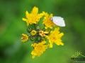 Człowiek robi zdjęcie kwiatkowi, a tu owad usiadł pozować...