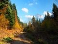 Leśna droga prowadząca z Duszatyna w stronę Jeziorek Duszatyńskich.