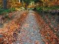 Szlak czerwony jesienią do Jeziorek Duszatyńskich.