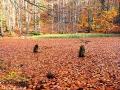 Buki rosnące wokół Jeziorek Duszatyńskich sprawiają jesienią iż prawie nie widać lustra wody.