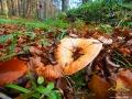 Ostatnie bieszczadzkie RYDZE tej jesieni nad Jeziorkami Duszatyńskimi.