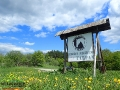 W Bieszczadach w wielu miejscach można pojeździć na koniach - my dziś spędziliśmy cudowne chwile w OJ TARPAN w Wysoczanach - zachęcamy!