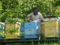 Skansen pszczelarstwa w Stróżach