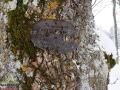 Tabliczka z jednego z nagrobków na cmentarzu w Starym Łupkowie przybita do drzewa wiele lat temu...