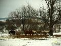 Konie na stadninie koni.