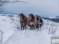 Kulig na dawnej trasie bieszczadzkiej kolejki leśnej w okolicach Łupkowa.