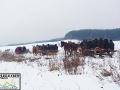 Początkowy odcinek trasy widokowego kuligu po Bieszczadach.
