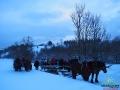 Koniec kuligu na dzisiejszy dzień. Koniki odpoczną, a turyści następnego dnia wybiorą się na rakiety śnieżne.