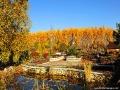 Arboretum w Bolestraszycach jesienią.