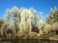Arboretum w Bolestraszycach zimą.