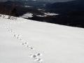 Trop lisa na śniegu w stronę TARNICY 1346m.