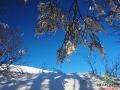 Bukowe firanki otulone śniegiem wychodząc z lasu na Połoninę Caryńską.