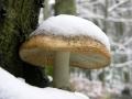 Zima tego roku w Bieszczadach przyszła nieco wcześniej...