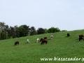STADNINY KONI w Bieszczadach - wypasające się konie przy stadninie w Wysoczanach