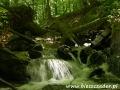 Potok Olchowy tworzący Jeziorka Duszatyńskie