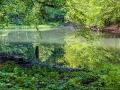 Liście odbijające się w tafli dolnego Jeziorka Duszatyńskiego.