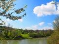 Rzeka OSŁAWA w Mokrem będąca umowną granicą między Bieszczadami, a Beskidem Niskim.