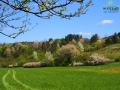 Kolory wiosny w Bieszczadach...