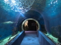 Oceanarium w największym na Węgrzech ZOO w Nyiregyhazie.