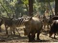 ZOO Sosto Furdo - zebry i nosorożce.