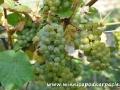 Winnice Podkarpacia i w Bieszczadach 4
