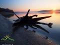 Korzeń jednego z drzew nad brzegiem jeziora przy zachodzie słońca nad Bieszczadami.