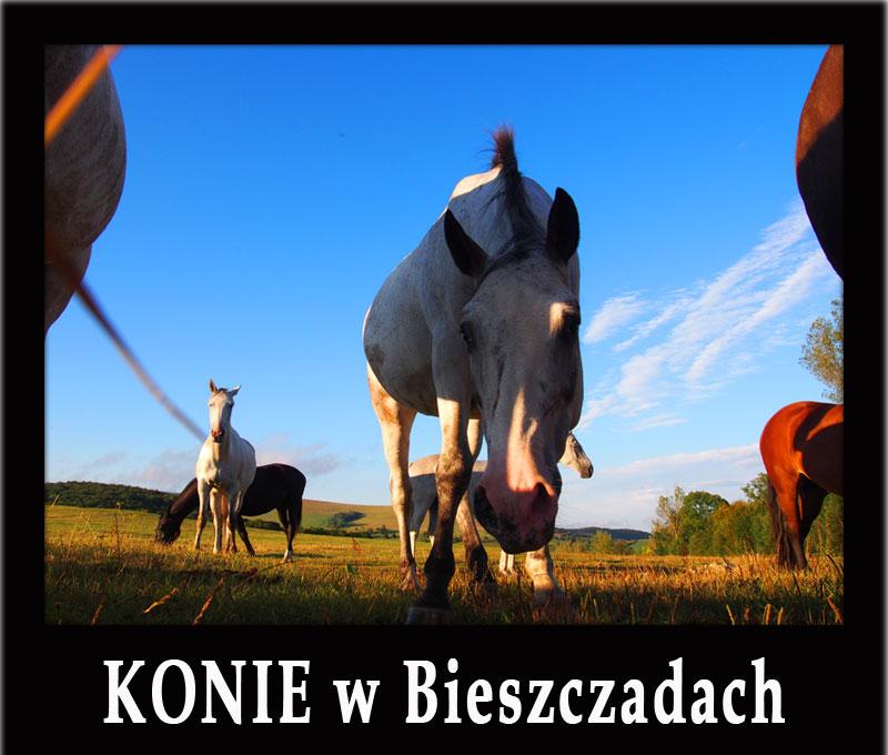 KONIE w Bieszczadach - stadniny koni, gdzie można się nauczyć jeździć, najlepsze szlaki konne, jazda w terenie, hotele...