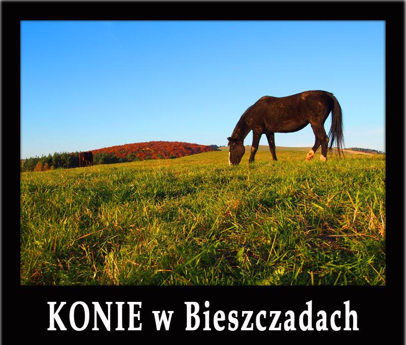 KONIE w Bieszczadach - najlepsze stadniny, nauka jazdy, szlaki konne, rajdy konne...