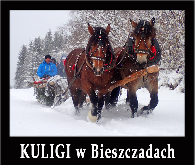 Najlepsze KULIGI w Bieszczadach - jedna z atrakcji zimą!