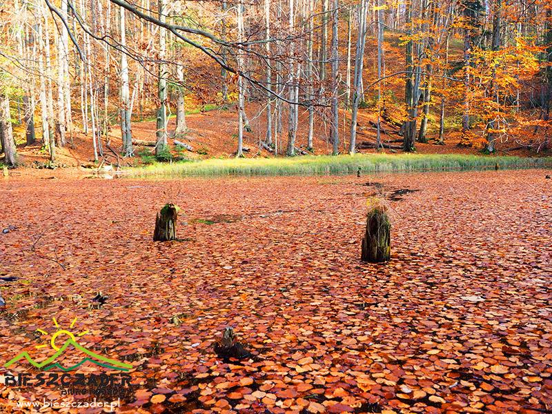 Buki rosnące nad Jeziorkami Duszatyńskimi sprawiają, że jesienią niemal nie widać wody w dolnym jeziorku.