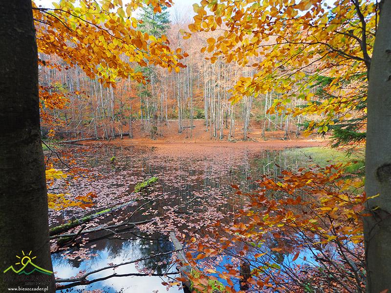 Buki same tworzą naturalne ramki do zrobienia zdjęcia Jeziorek Duszatyńskich.