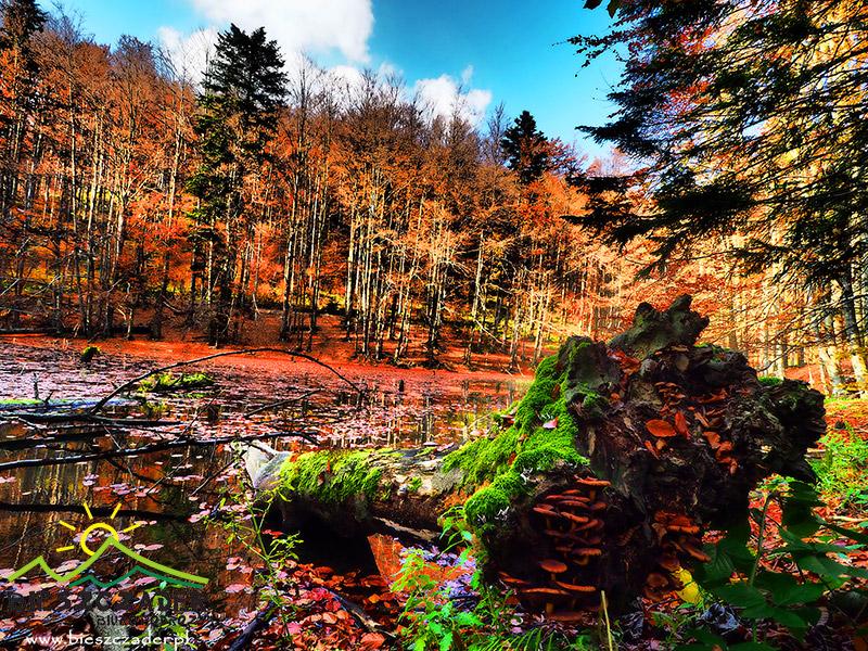 Dolne JEZIORKO DUSZATYŃSKIE późną jesienią.