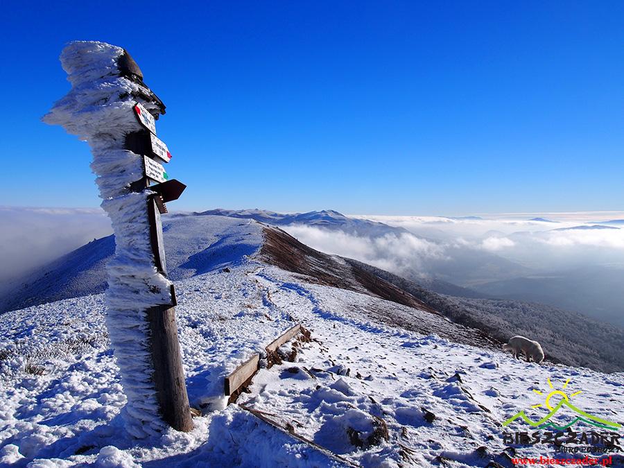 Drogowskaz pokazujący kierunki, kolory szlaków, czasy przejść na szczycie Połoniny Caryńskiej zimą podczas inwersji.