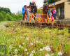 Wiosną jadąc drezynami rowerowymi niemal płyniemy po takich kobiercach kwiatów w Bieszczadach...