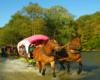 Konie z dyliżansami przejeżdżające przez rzekę Osława, czyli granicę między Bieszczadami, a Beskidem Niskim na wycieczce jednodniowej Traperska Przygoda po Bieszczadach.