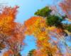 Kolorowa jesień w Bieszczadach, a dokładnie w lesie bukowym przy szlaku czerwonym prowadzącym do Jeziorek Duszatyńskich w okolicach Komańczy, na wycieczce jednodniowej po Bieszczadach Traperska Przygoda.