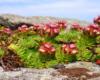 Nie ma barierek i siatek ograniczających ruch turystyczny, a skalniaków i chronionych roślin w paśmie Pikuja nie brakuje. Oczywiście opowiadamy o najciekawszych roślinach turystom na naszych wycieczkach jednodniowych.